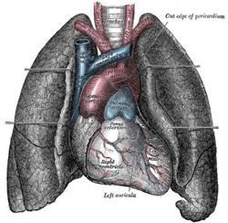 Mesothelioma6